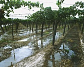 Irrigation system in Mendoza wine-growing region, Argentina
