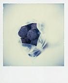 Black truffles in plastic bag