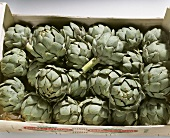 Artichokes in a crate (from Brittany, France)