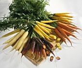 Various types of carrots on chopping board