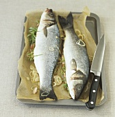 Two fresh sea bass with herb stuffing on baking tray