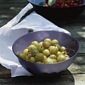 Green gooseberries in a pale-purple bowl