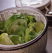 Washing iceberg lettuce in salad spinner