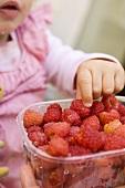 Child reaching for raspberry in plastic punnet