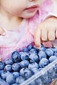 Child eating freshly washed blueberries