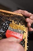 Hände schaben Honig mit Honigkamm aus Honigwabe