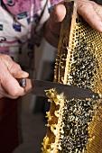 Imker schabt Honig mit Messer von Honigwabe