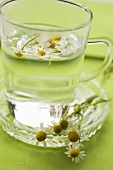 Chamomile flowers and chamomile tea
