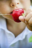 Child eating a radish