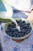 Pouring milk onto blueberries
