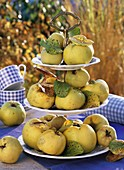 Fresh quinces on tiered stand, checked cups