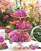 Etagere mit Hortensien und herbstlichen Blättern auf Tisch