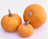 Three orange pumpkins, variety Wee be Little