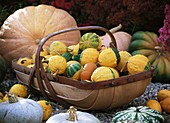 Pumpkins and ornamental gourds in and around a trug