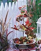 Etagere mit Hagebutten, Kastanien, Hortensien und Herbstlaub