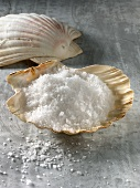 Fleur de sel (expensive salt) in scallop shell