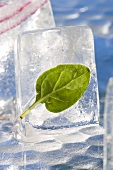 Basil leaf in an ice cube