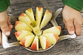Child's hands cutting up an apple with an apple slicer