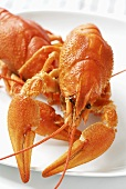 Cooked freshwater crayfish