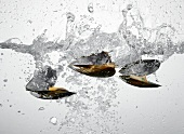 Mussels falling into water