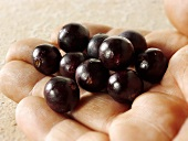 Acai berries on someone's hand