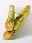 Two stalks of sugar cane