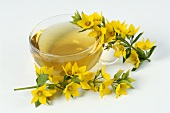 Yellow loosestrife (Lysimachia vulgaris) with cup of tea