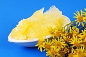 Flowering ragwort (Senecio jacobaea) and ointment