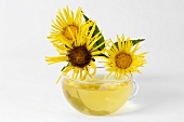 Cup of tea with elecampane flowers
