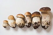 Six ceps in a row