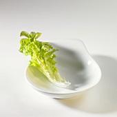 Lettuce leaf (Lollo bianco) in white dish