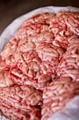 Fresh brains (Tai Po Market, Hong Kong, China)