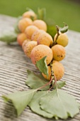 Organic apricots on branch with leaves on wood