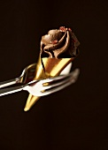 Cognac truffle with pink pepper held in tongs