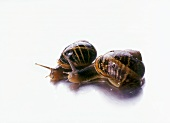 Two live snails