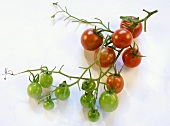 Cherry tomatoes, ripe and unripe
