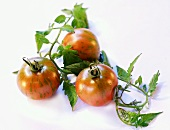 Three tiger tomatoes with leaves