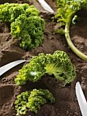 Several kale leaves on soil