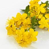 Flowering St. John's wort