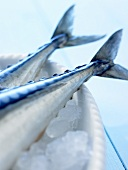Two mackerel tails on crushed ice