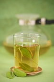A glass of sage tea in front of glass pot