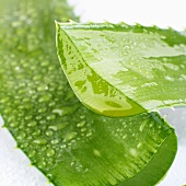 Aloe vera leaf with drops of water