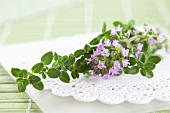 Lemon thyme with flowers