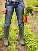 Woman holding freshly picked carrots in vegetable garden