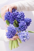 Hands holding blue hyacinths