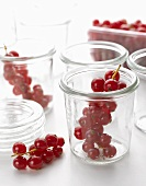 Redcurrants, some in jam jars