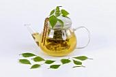 Birch leaf tea in glass teapot
