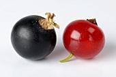 Rote und schwarze Johannisbeere (Close Up)