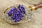 Lavender flowers, fresh and dried, in scoop