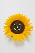 Sunflower with sunflower seed face